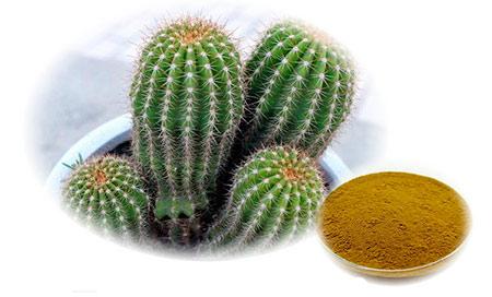 Экстракт кактуса Hoodia gordonii