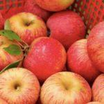 Несладкие яблоки