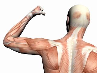 Биомеханика удара рукой
