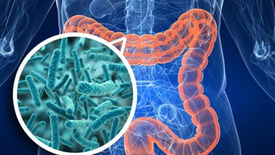 Ликвидация патогенных микробов в кишечнике