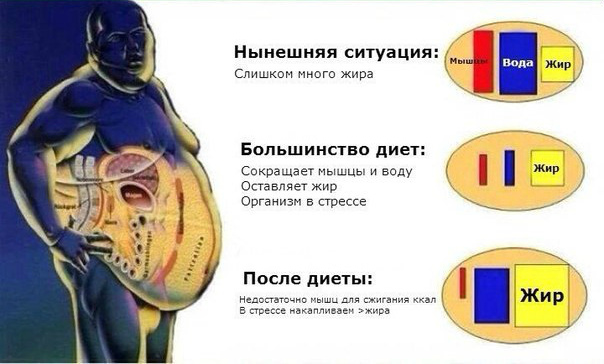 Уменьшение мышц при диетах