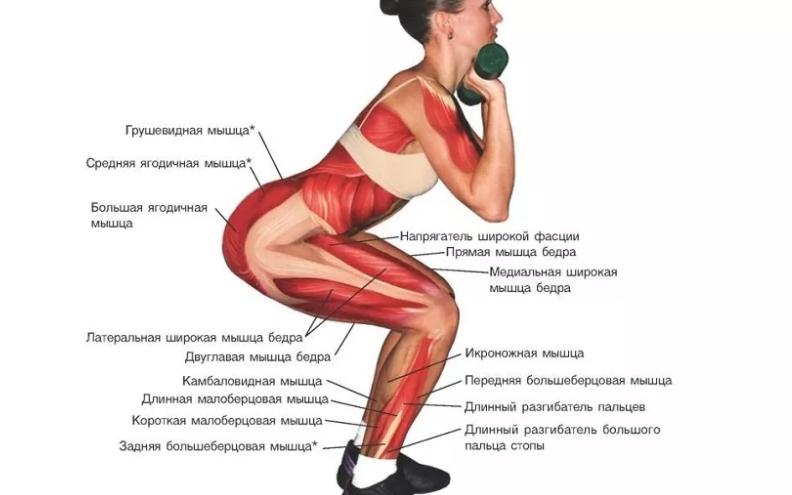 Мышцы при приседании