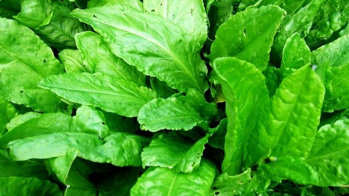 Аптека на грядках: зачем есть огородную зелень и чем она полезна?