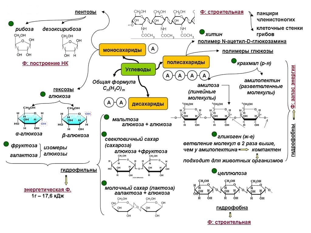Полисахариды что это такое - общая формула, физические и химические свойства