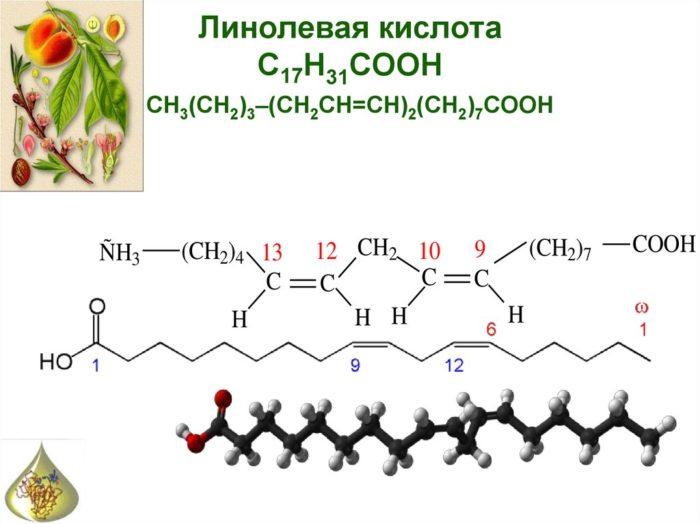 Химическая формула линолевой кислоты