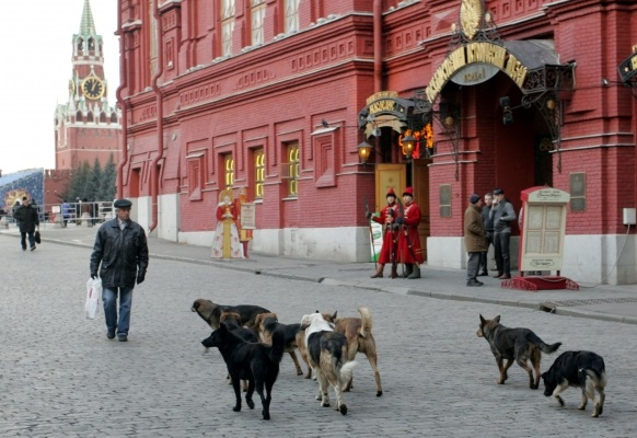 Как предотвратить нападение уличных собак