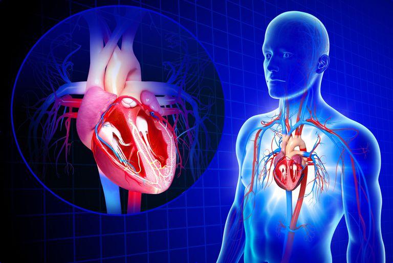 Нарушение работы сердечно-сосудистой системы