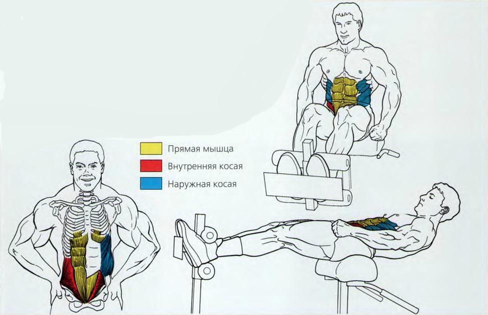 Скручивания на римском стуле