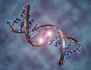 Генетические особенности