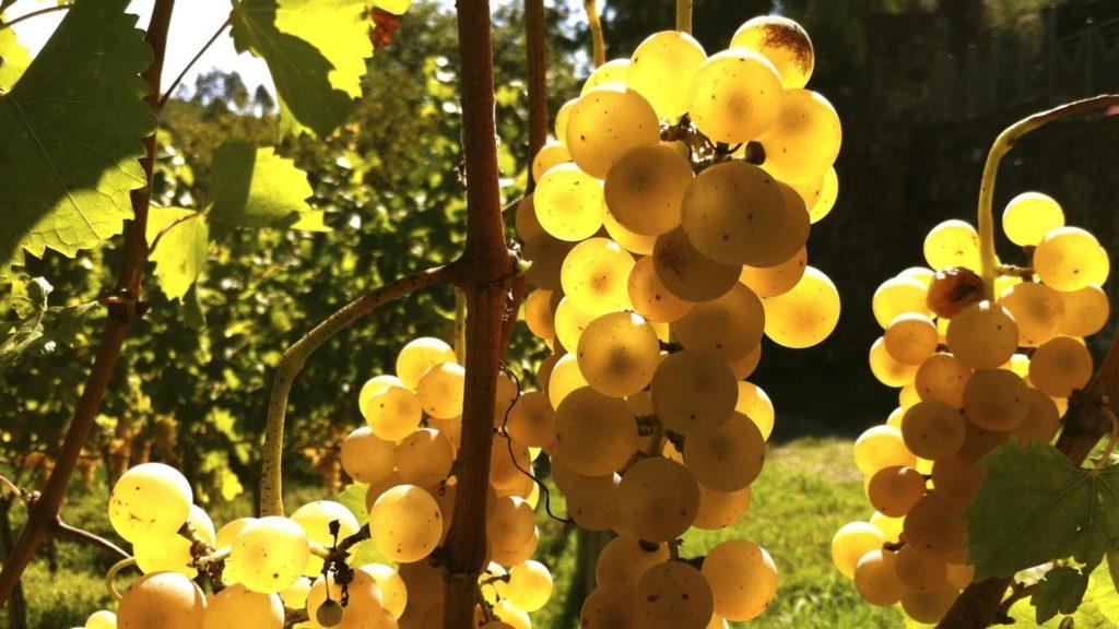 диета виноградная
