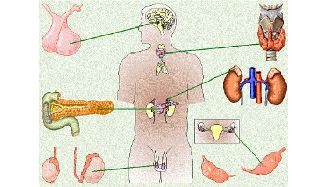 Железами внутренней секреции